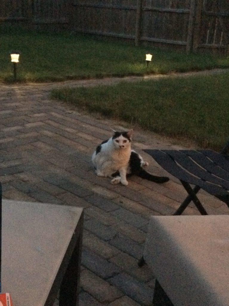 Outdoor loving cats